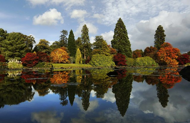 Changing autumn leaves are reflected in a pond in Sheffield Park Gardens near Haywards Heath in southern England October 17, 2012. (Photo by Luke MacGregor/Reuters)