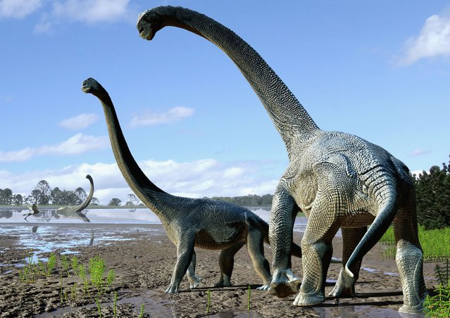 "A handout photo released by Nature shows an artist's impression of life restoration of the Savannasaurus elliottorum based on the type specimen (""Wade"") and comparisons with titanosaurs from around the world. Scientists unveiled on October 20, 2016 fossils from a new species of giant, long-necked dinosaur discovered in northeastern Australia, speculating that it may have traversed Antarctica from South America some 105 million years ago. (Photo by Travis Tischler/AFP Photo/Nature Publishing Group)"