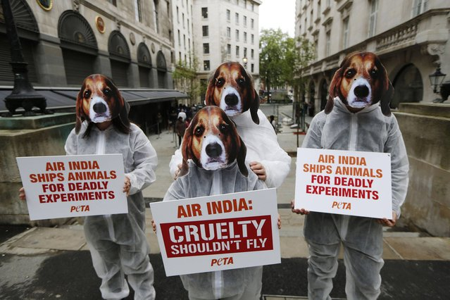 Supporters of PETA, People for the Ethical Treatment of Animals, protest outside the Indian High Commission in London against Air India lifting its ban on transporting animals to laboratories, Thursday, May 30, 2013. (Photo by Sang Tan/AP Photo)