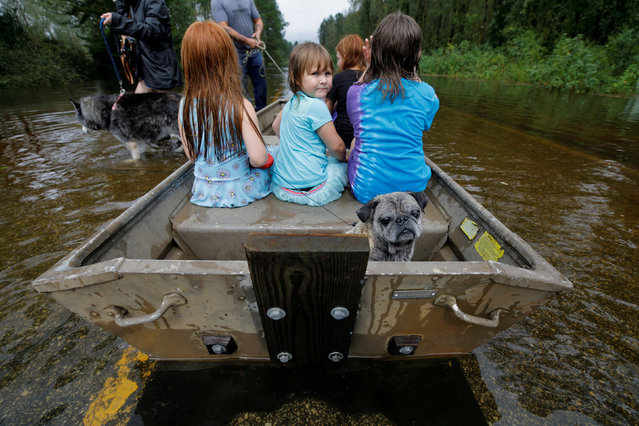 Iva Williamson, 4, peers behind her as she joins neighbors and pets in fleeing rising flood waters in the aftermath of Hurricane Florence in Leland, North Carolina, U.S., September 16, 2018. (Photo by Jonathan Drake/Reuters)