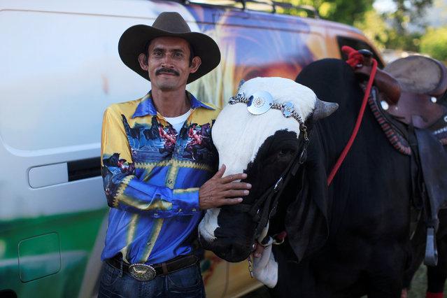Santos Castro pets a bull named Rambo during the bull riding event in Santa Tecla, El Salvador, December 15, 2016. (Photo by Jose Cabezas/Reuters)