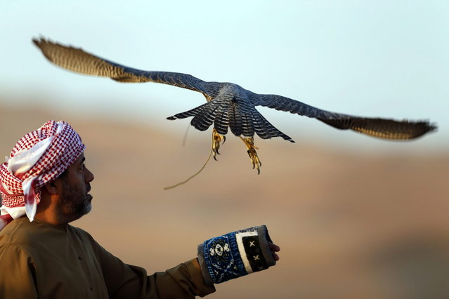 Emirati Mohammed Rakan Bin Harwon Al-Qubassiy looks on as his falcon flies at the Liwa desert, 220 kms west of Abu Dhabi, on the sidelines of the Mazayin Dhafra Camel Festival on December 21, 2013. The festival, which attracts participants from around the Gulf region, includes a camel beauty contest, a display of UAE handcrafts and other activities aimed at promoting the country's folklore. (Photo by Karim Sahib/AFP Photo)