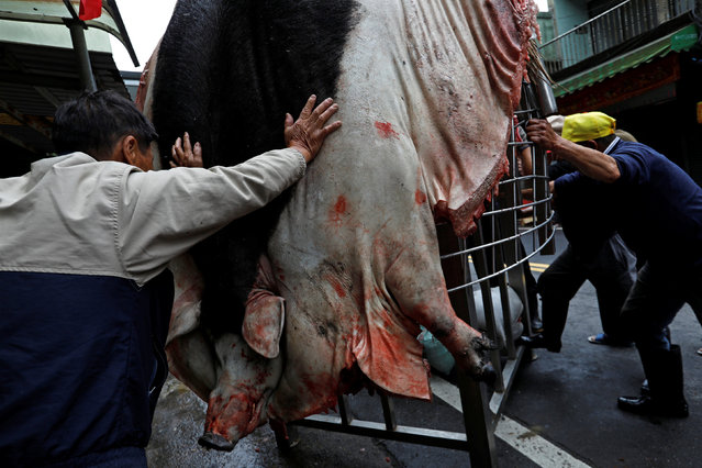 "The carcass of a fattened pig, winner of the ""holy pig"" contest, is attached to a metal frame during a sacrificial ceremony in Sanxia district, in New Taipei City, Taiwan February 1, 2017Tyrone Siu"