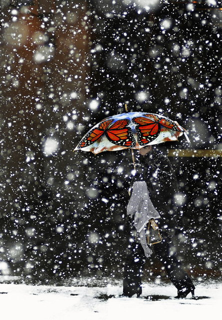 A pedestrian walks along Adams Avenue with her colorful umbrella of monarch butterflies during a brief snow storm in downtown Scranton, Pa., on Tuesday, February 25, 2014. (Photo by Butch Comegys/AP Photo/The Scranton Times-Tribune)