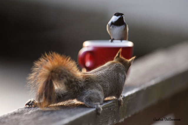 """Coffee for two"". (Photo by Andre Villeneuve)"