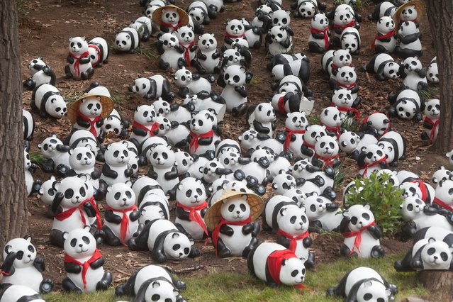 Panda toys are seen in the panda house of the Siberian Tiger Park, July 1, 2015, in Changchun, China. (Photo by Getty Images/ChinaFotoPress)