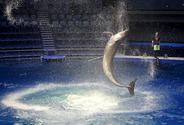 A dolphin jumps out of the water at a media preview for the Epson Aqua Park Shinagawa aquarium's re-opening in Tokyo, July 6, 2015. (Photo by Toru Hanai/Reuters)
