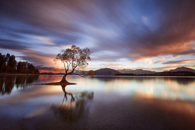 """One Calm Tree"". A whirlwind trip around New Zealand's top landscape locations ended with a gloriously calm morning at Lake Wanaka. We'd traveled 1500kms in 5 days and slept barely 18 hours, finding our peace on the shore if only for an hour before the drive back to Christchurch. Photo location: Lake Wanaka, South Island, New Zealand. (Photo and caption by Robert Dickinson/National Geographic Photo Contest)"