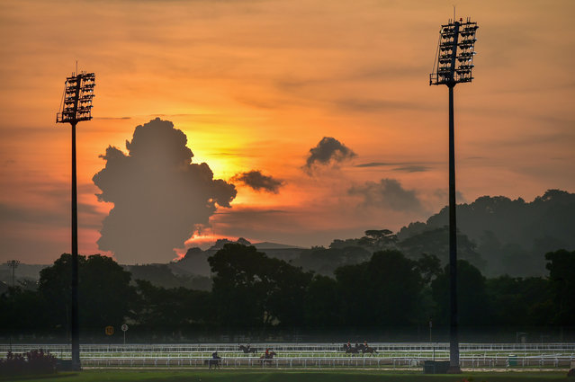 General view of trackwork from Kranji Racecourse on May 14, 2015 in Singapore. (Photo by Vince Caligiuri/Getty Images)