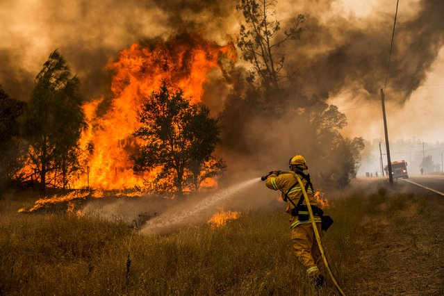 A firefighter battles a spot fire at the Rocky Fire in Lake County, California July 30, 2015. (Photo by Max Whittaker/Reuters)