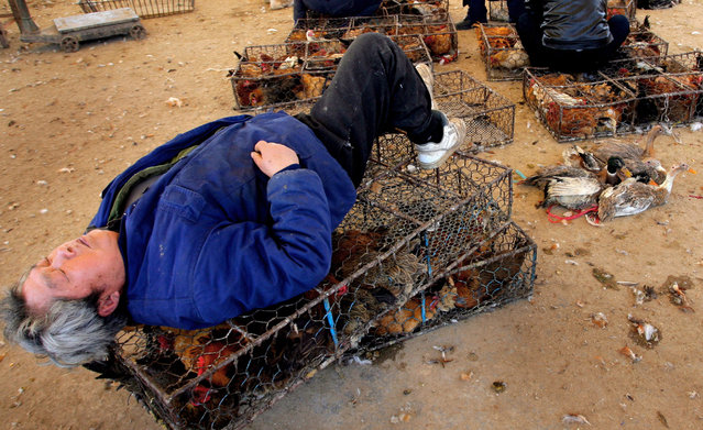 A Chinese man sleeps on a chicken cage at a wholesale market in Nanjing, capital of China's Jiangsu province March 16, 2006. China faces an uphill struggle to contain bird flu ahead of an expected spike in infections during spring, hampered by surveillance problems, ignorance and the country's sheer size, health and government officials said. (Photo by Reuters/China Stringer Network)
