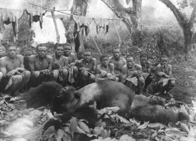 A group of African tribespeople squat round a huge dead gorilla, January 1932. (Photo by Topical Press Agency)
