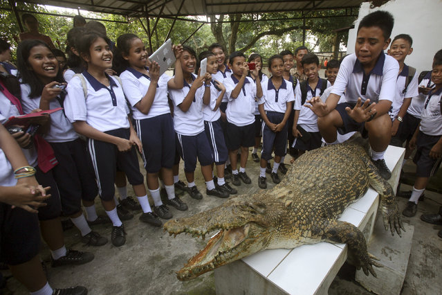 A student reacts as he sits on a crocodile for a photo session before his classmates at a crocodile farm in Medan, North Sumatra, Indonesia, Tuesday, September 30, 2014. A trainer is standing in front of the creature for the safety of the visitors. (Photo by Binsar Bakkara/AP Photo)