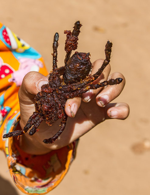 """Breaded and deep fried tarantula for sale at Skuon, Cambodia, known locally as """"Spiderville"""". (Photo by Alamy Stock Photo)"""