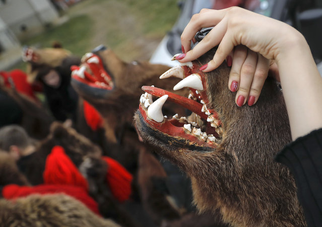 In this Saturday, December 30, 2017, picture Raluca Atrejei stretches her hands during an annual bear parade in Comanesti, Romania. (Photo by Vadim Ghirda/AP Photo)