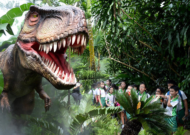Schoolchildren look at a lifelike animatronics display of a dinosaur at the dinosaur-themed Zoo-rassic Park in Singapore on November 16, 2016. To raise awareness on the sixth mass extinction, the Singapore Zoo and River Safari displayed lifelike dinosaur animatronics where visitors can trail along the Dinosaur Valley which does not involve living animals. (Photo by Roslan Rahman/AFP Photo)