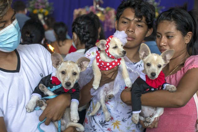 Youths carry their dogs to be blessed by Saint Lazarus, in Monimbo neighbourhood in Masaya, about 35 km south of Managua, on March 21, 2021. According to tradition in Nicaragua, faithfuls ask Saint Lazarus for the health of their dogs and pay these favours back by bringing their pets dressed in costumes to attend mass in honour of the saint. (Photo by Inti Ocon/AFP Photo)
