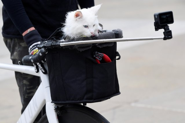 """A cat sits in a bicycle basket of a demonstrator during a """"Kill the Bill"""" protest in London, Britain, May 1, 2021. (Photo by Toby Melville/Reuters)"""