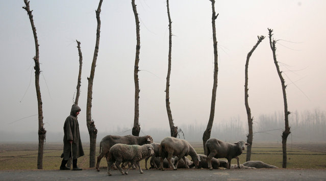 A Kashmiri boy leads flock of sheep during foggy weather on the outskirts of Srinagar, the summer capital of Indian Kashmir, 08 December 2016. The weather in the region continued to remain dry even as the valley remains in the grip of a cold front. (Photo by Farooq Khan/EPA)
