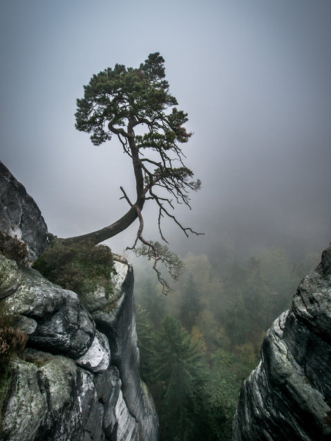 """Against the Odds"". Saxon Switzerland. (Photo and caption by Andreas Wonisch)"