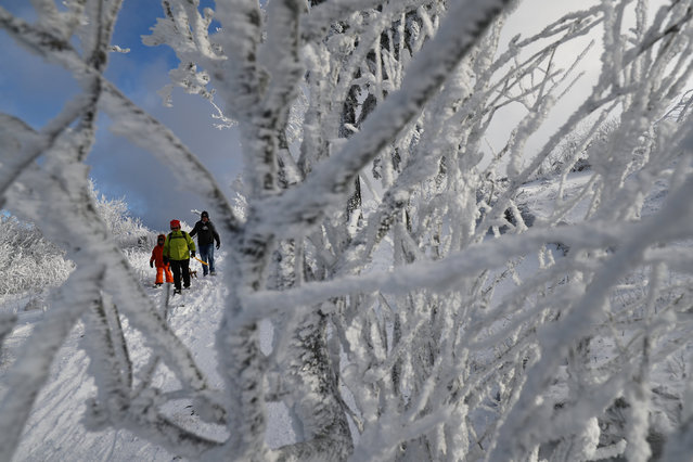 People pull their sledges as they enjoy a sunny day at the snow covered Feldberg mountain near Frankfurt, Germany, January 5, 2017. (Photo by Kai Pfaffenbach/Reuters)