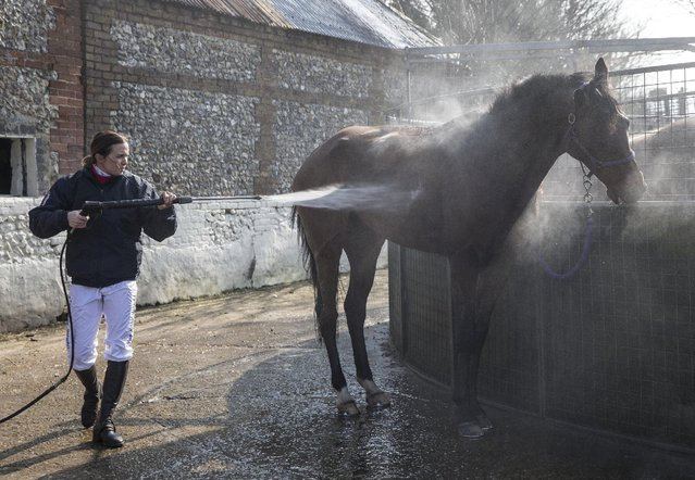 Jockey and former British Olympic cycling champion Victoria Pendleton hoses down Minella Theatre at Lawney Hill Racing in Aston Rowant, southern England March 17, 2016. She is due to ride Pacha Du Polder in the Foxhunter Chase at Cheltenham Festival tomorrow. (Photo by Eddie Keogh/Reuters)
