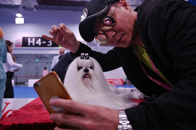 A man takes a selfie next to a Maltese dog during the 2019 Shanghai World Dog Show in Shanghai on April 30, 2019 (Photo by Hector Retamal/AFP Photo)