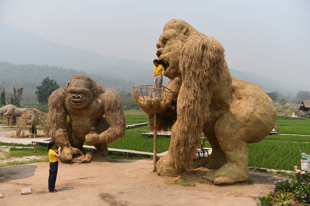 A student has her picture taken with a King Kong sculpture made out of straw in the northern Thai province of Chiang Mai on April 3, 2019. (Photo by Lillian Suwanrumpha/AFP Photo)