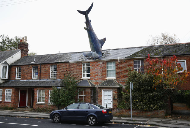 A model of a shark is seen in the roof of a house in Oxford, Britain October 26, 2013. The rooftop sculpture is 25 feet (7.6 m) long, made of fiberglass and was erected on the 41st anniversary of the dropping of the atomic bomb on Nagasaki. (Photo by Eddie Keogh/Reuters)