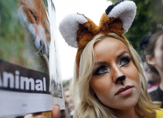 A protestor dressed as foxes demonstrates in front of the Houses of Parliament in London, Tuesday, July 14, 2015 urging policymakers to keep Britain humane by keeping the Hunting Act intact. (Photo by Frank Augstein/AP Photo)