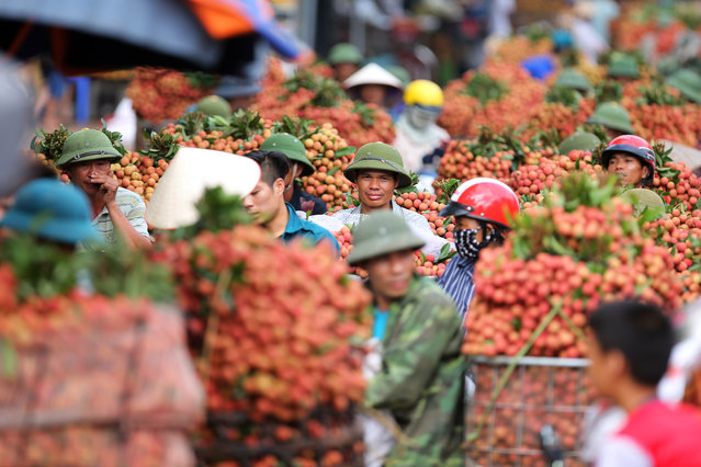 People carry lychee for sale on a motorbike on a street in Luc Ngan, Bac Giang province, Vietnam, 22 June 2016. Lychee output in Bac Giang province is expected to reach 130,000 tonnes this year. China is still Vietnam's main lychee export market so far, buying around 60 percent of the annual crop, according to official reports. (Photo by Luong Thai Linh/EPA)