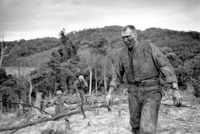 A stunned and burned gunner of a CH-46 Sea Knight helicopter walks from the jungle after being pinned down by enemy fire following the crash of his chopper in the bivouac area of a U.S. Marine unit about one mile (2000 meters) south of the Demilitarized Zone (DMZ), July 15, 1966. Troops had to fight off Viet Cong snipers before the wounded gunner could emerge from the cover of the brush. Two others survived, but 13 were reported dead in the crash and subsequent fire. (Photo by Horst Faas/AP Photo)