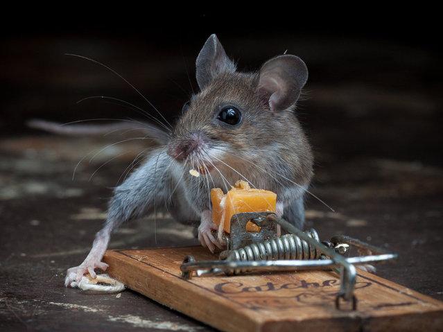 Paul Turton by Mouse VS  Mousetrap