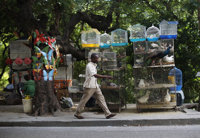 A man walks past cages with animals for sale in Port-au-Prince, Haiti, on December 10, 2017. (Photo by Andres Martinez Casares/AP Photo)