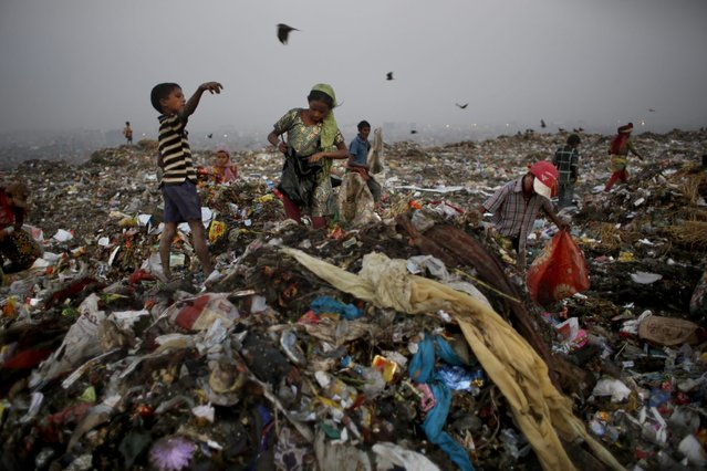 In this October 17, 2014 photo, young waste pickers look for recyclable items at a landfill on the outskirts of New Delhi, India. (Photo by Altaf Qadri/AP Photo)