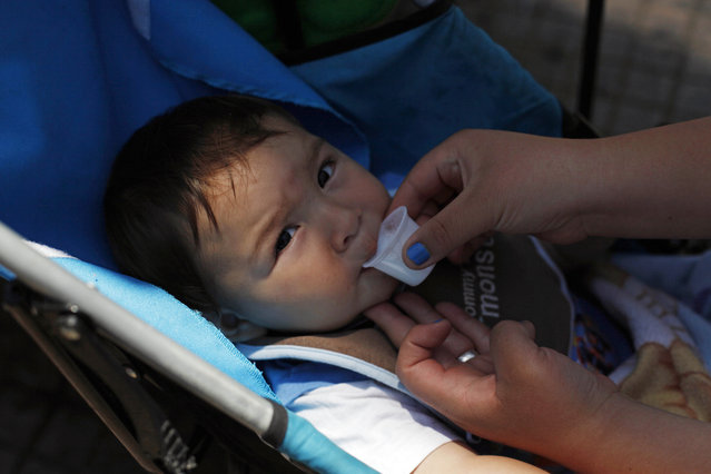 In this December 15, 2014 photo, a toddler is given fresh donkey milk from his mother in Santiago, Chile. The vendor, Ricardo Alegria, said the milk is taken as a vitamin jolt for babies with gastric problems, and researchers at the University of Camerino in Italy have reported it can be a good substitute for children with allergies to cow's milk. (Photo by Luis Hidalgo/AP Photo)