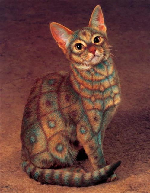 New Form Of Art : Cat Painting