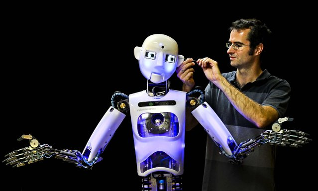 Engineered Arts design and production engineer Marcus Hold works on a nearly completed RoboThespian robot  in Penryn, England, on July 30, 2013. The Cornish company is the world's only maker of commercially available life sized humanoid robots. (Photo by Matt Cardy/Getty Images)