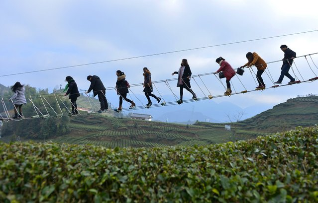Tourists walk above a tea plantation in Enshi, Hubei province, December 27, 2015. (Photo by Reuters/Stringer)