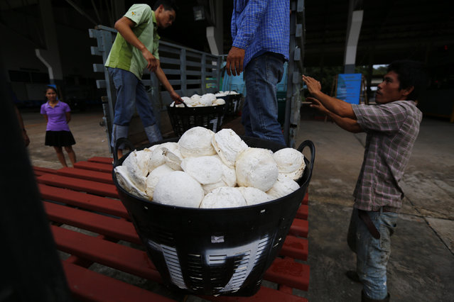 Workers move baskets filled with rubber at the central rubber market in Nong Khai, Thailand, September 16, 2015. Steps announced this week by Thailand's ruling junta to help rubber producers grappling with plunging prices do not go far enough, some farmers said on January 13, 2016. The cabinet has promised to buy some rubber directly from farmers at rates above market levels and announced piecemeal measures including a plan to open up rubber processing factories. (Photo by Jorge Silva/Reuters)