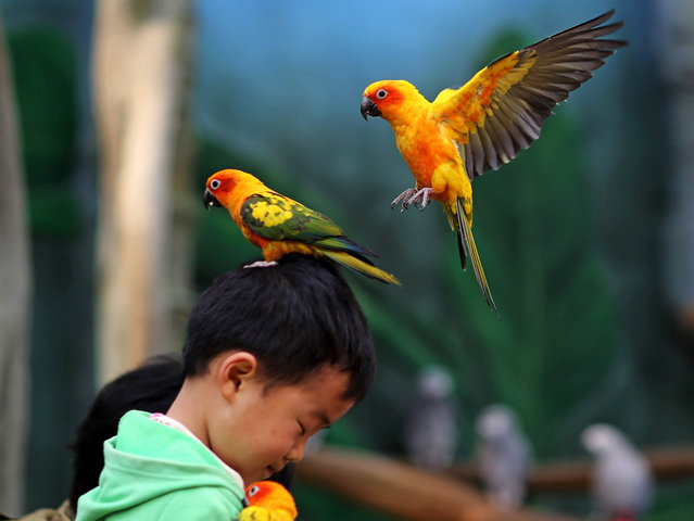 A parrot standing on the head of a child in the Kunming Zoo in Kunming, southwest China's Yunnan province. (Photo by AFP Photo/Stringer)