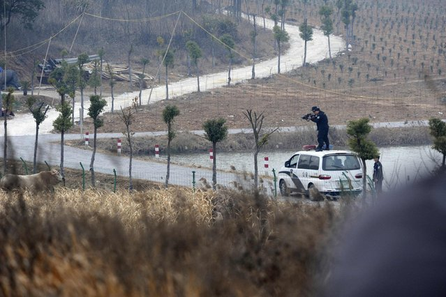 Policemen aim their rifles at a cow, which escaped from a truck, in Liangdun village of Nangang township, Anhui province December 15, 2013. (Photo by Reuters/China Daily)