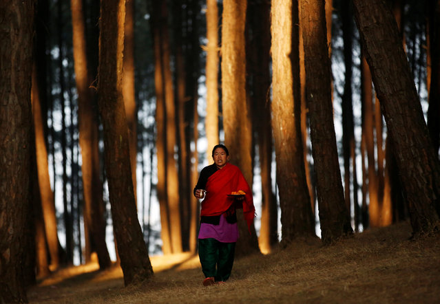 A devotee walks along the woods of Changu Narayan as she arrives to perform rituals and prayers during the Swasthani Bratakatha festival in Bhaktapur, Nepal February 8, 2017. (Photo by Navesh Chitrakar/Reuters)