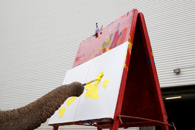 """An elephant paints a canvas before Ringling Bros and Barnum & Bailey Circus' """"Circus Extreme"""" show at the Mohegan Sun Arena at Casey Plaza in Wilkes-Barre, Pennsylvania, U.S., April 30, 2016. (Photo by Andrew Kelly/Reuters)"""