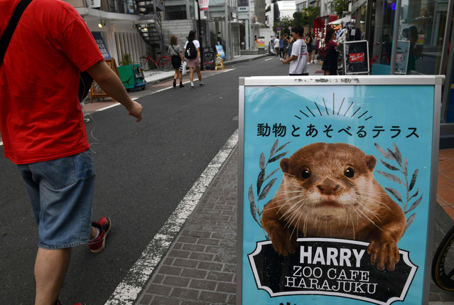A promotional signboard for a pet cafe that features otters is displayed at the Harajuku district in Tokyo on August 21, 2019. Social media are fuelling a burgeoning appetite for acquiring wild otters and other endangered animals as pets, conservationists say, warning that the trend could drive species extinct. (Photo by Toshifumi Kitamura/AFP Photo)