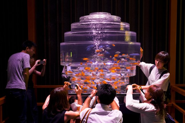 People take pictures of goldfish in a fish tank at the Art Aquarium exhibition in Tokyo July 10, 2015. (Photo by Thomas Peter/Reuters)