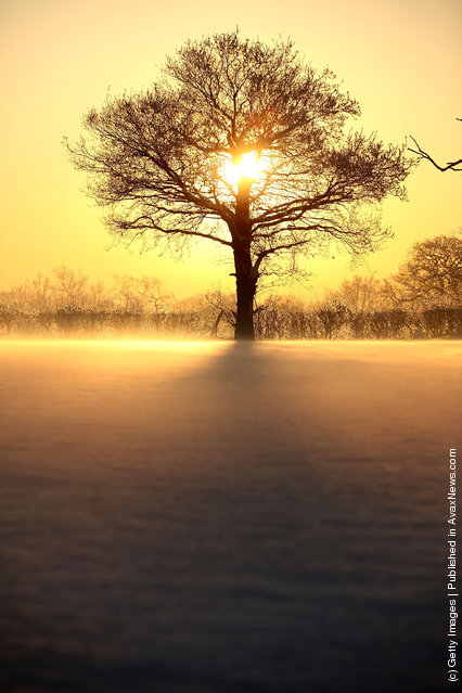 A hoar frost clings to trees as the sunsets over fields on January