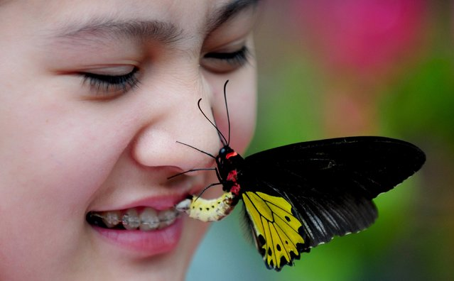 """This picture taken on June 28, 2014 shows a butterfly on a tourist's face in the """"butterfly valley"""" in Shenyang, northeast China's Liaoning province. The butterfly valley, with a collection of some 400 butterflies from more than 20 species, opened to the public on June 28, local media reported. (Photo by AFP Photo/Stringer)"""