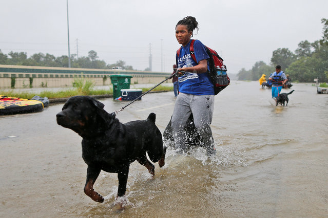 Destyn Scales and her dog Dexter wade through flood waters in Beaumont Place, Houston, Texas on August 28, 2017. (Photo by Jonathan Bachman/Reuters)