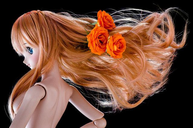 Dolls. One week, One flower No.23 -Rose-. (Suzuhico)